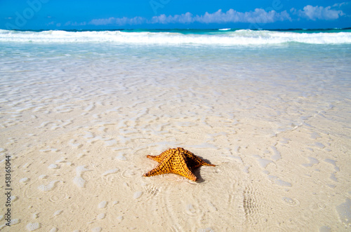 starfish over beach