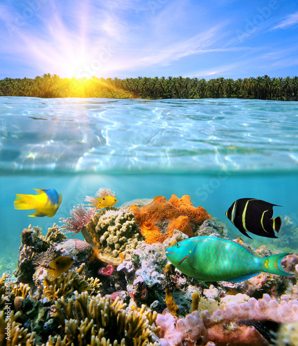Sunset and colorful underwater marine life