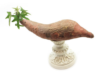 Sprouting yam on a pedestal