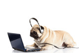 pug dog with headphone isolated on white background callcenter
