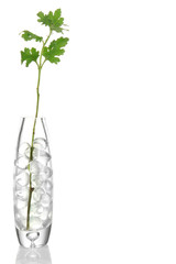 Branch in vase with hydrogel isolated on white