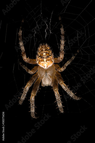 large spider in web isolated on black