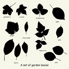 A set of garden leaves