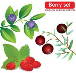 Set berries, blueberries, strawberries, cranberries