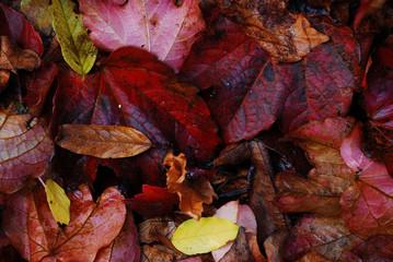 foglie morte (fine art)