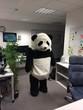 Help the Panda