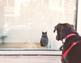Cat and Dog Staredown