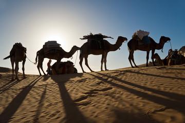 Drmadaires sur une dune dans le Sahara - Tunisie