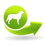 canin sur symbole vert poster
