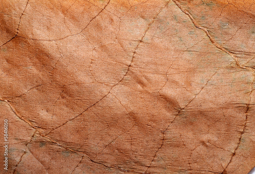 Tobacco leaf texture - 58416050