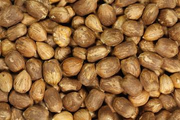 ripe hazelnut kernels abstract background