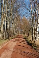 Weg mit Pfütze durch Herbstlandschaft