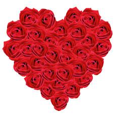 Blumenherz, Rote, Rose,