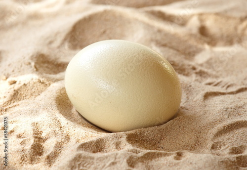 Foto op Canvas Struisvogel Ostrich eggs