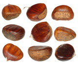 Set chestnut isolated on white background, Edible Chestnuts