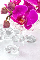 Pink orchid with dew and reflection