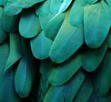 Macaw Feathers (Turquoise)