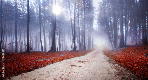 Fototapeta Mystic forest road