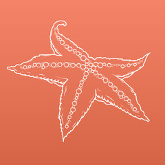 Detailed white outlines of starfish