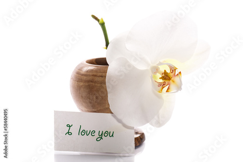 beautiful white orchid