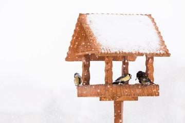 winter tit birds in animal feeder