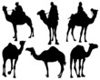 Black silhouettes of camels, vector
