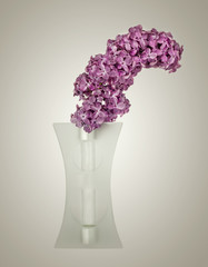 Bouquet of violet lilac in a vase
