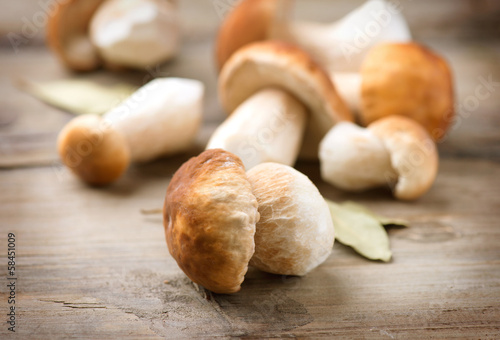 Mushroom Boletus over Wooden Background. Autumn Cep Mushrooms