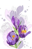 Sketch of a spring  flowers violet colors