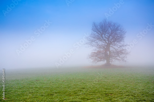 cold misty morning with tree