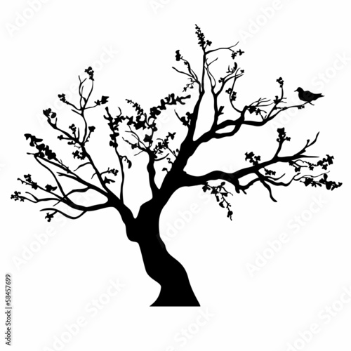 Tree silhouettes. - 58457699