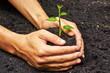 Obrazy na płótnie, fototapety, zdjęcia, fotoobrazy drukowane : two hands holding, growing and caring a young green plant