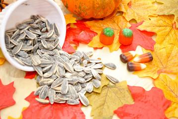 Spilled Fall Sunflower Seeds