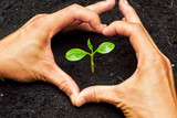 two hands forming a heart shape around a young plant