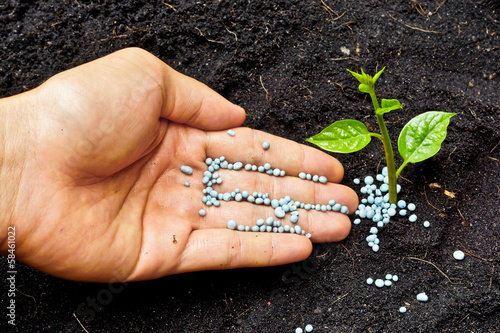 Keuken foto achterwand Lente a hand giving fertilizer to a young plant