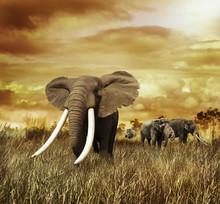 Les éléphants au coucher du soleil