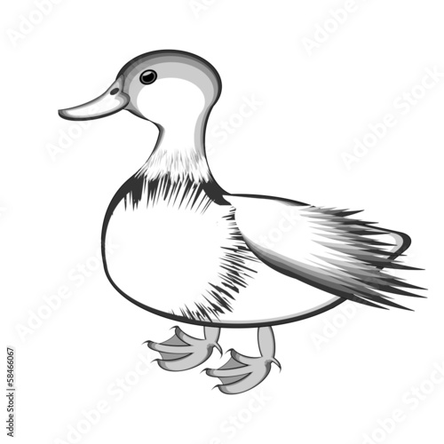 A monochrome sketch of a duck