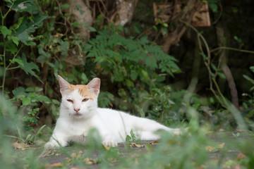 cat on ground