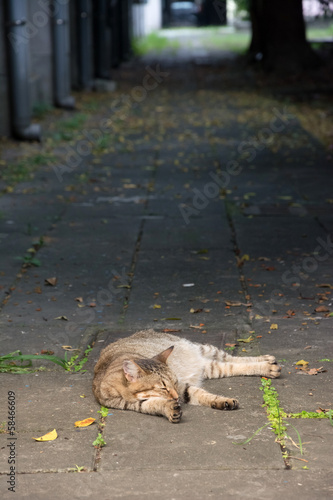 Stray tabby cat