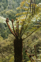 tree fern growing in rainforest