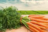 Carrots Bunch - 58472884