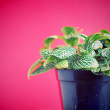 Green plant on red background with retro filter effect