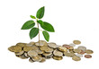 Sapling growing from coins
