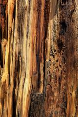 écorce de bois mort au volcan Sunset crater