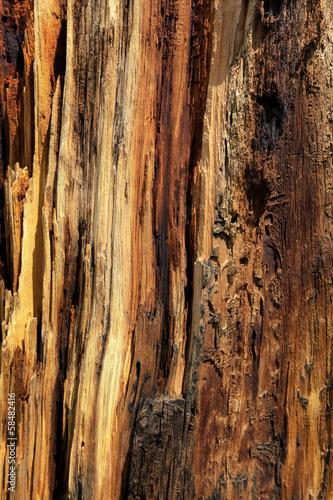 Papiers peints Parc Naturel écorce de bois mort au volcan Sunset crater