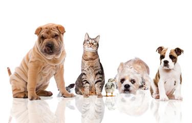 kleine Gruppe Haustiere