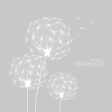 Fototapety Abstract background with  flower dandelion