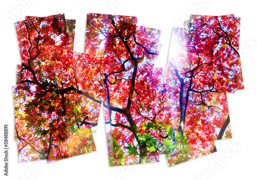 colourful tree collage