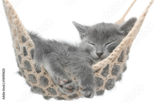 Foto op Plexiglas Kat Cute gray kitten lying in hammock