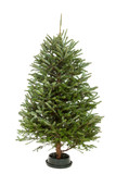 Undecorated Christmas Tree isolated on white